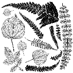 Iron Orchid Designs Fronds Decor Stamps (12x12)