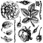 Iron Orchid Designs Lady Shalott Decor Stamp (12x12)