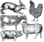 Farm Animals Decor Stamps