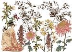 Japonica Decor Transfer (24x33)